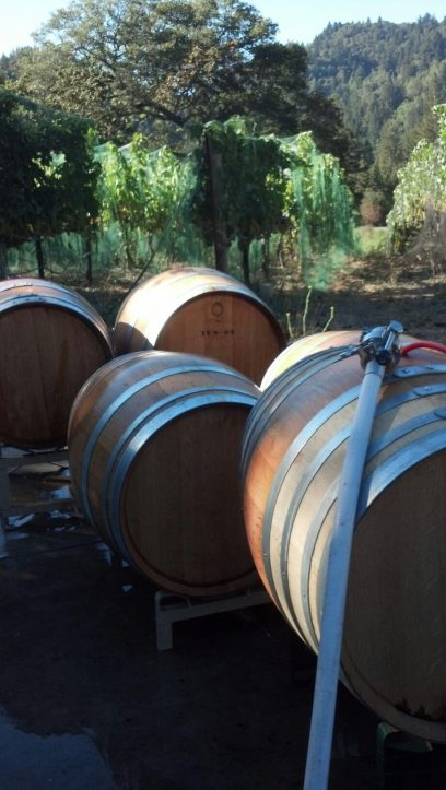 Filling Barrels with Pinot Noir