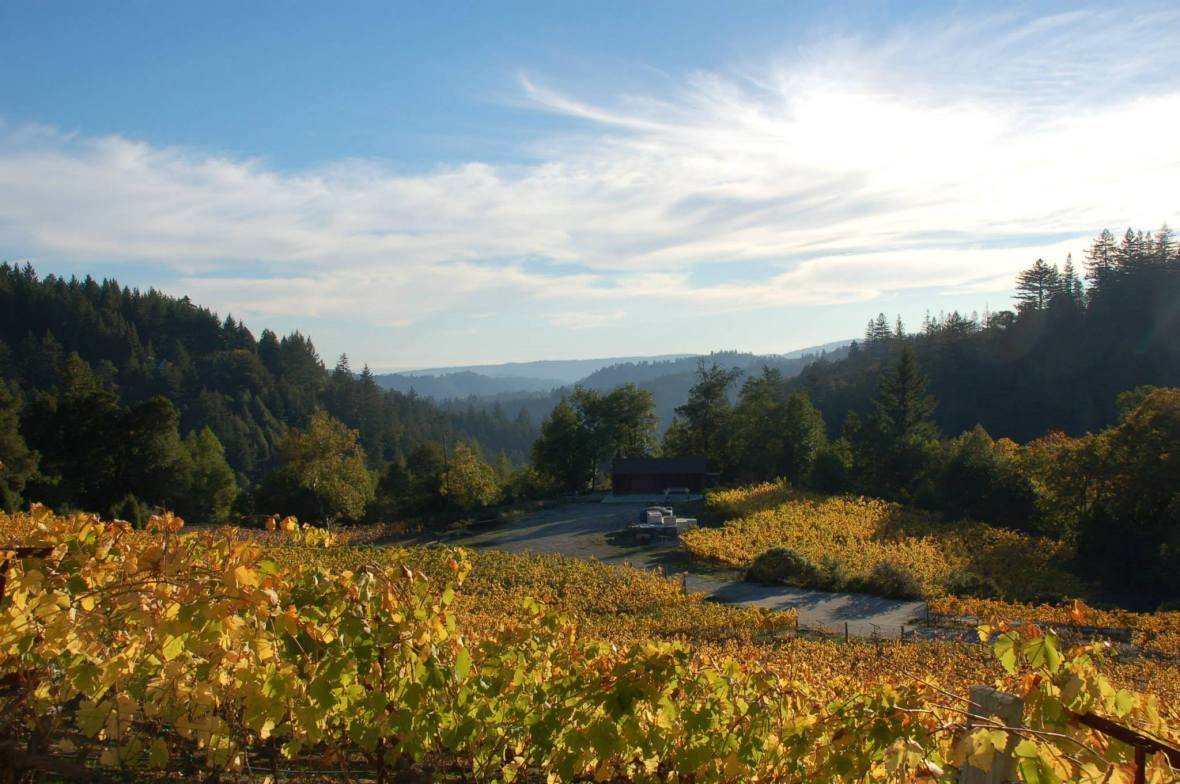 Silvertip_fall-view-of-vineyard-and-winery