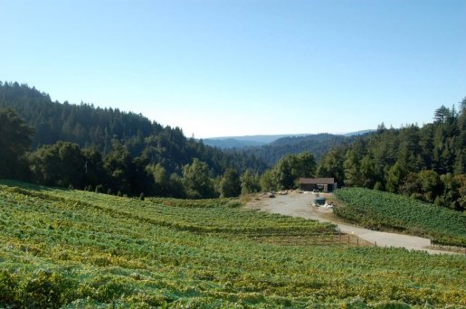 View of Winery and Vineyard