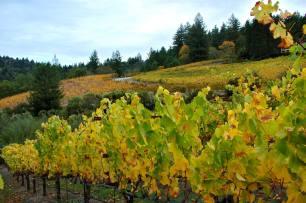 Vineyard in October